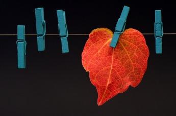 leaf-2886456_640